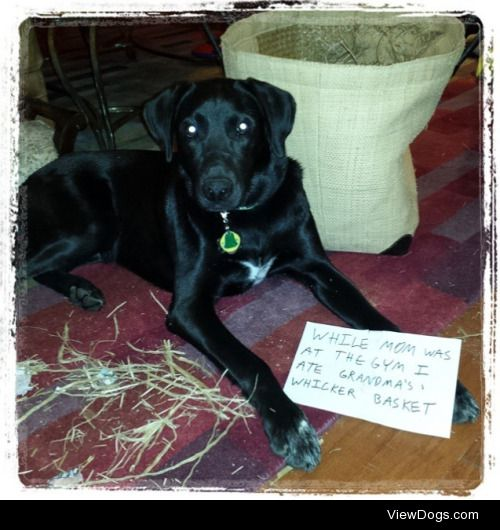 """A little exercise doeshurt  """"While mom was at the gym I ate…"""