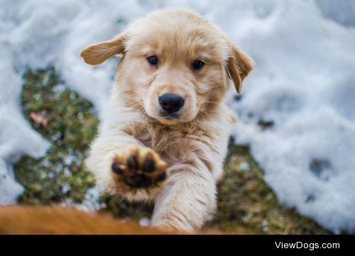 One Tough Puppy     Sebastian Gomez