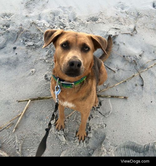 Rin Tin Tin is such a beach dog!