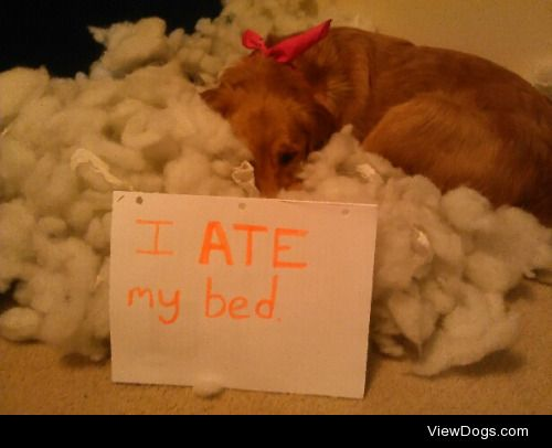 You say ruined, I sayimproved.  I ate my bed.