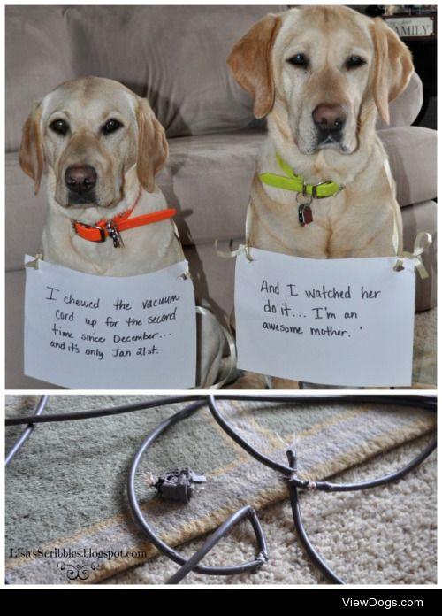 """Saving ourselves from the evil vacuumcleaner  """"I chewed the…"""