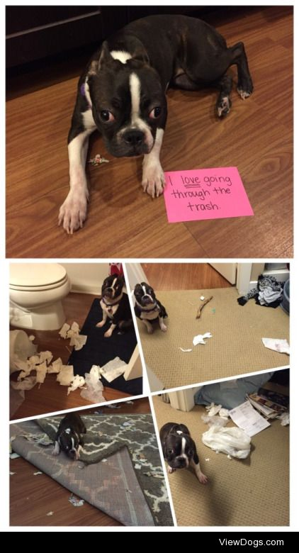 Escape, Search, andDestroy  We keep our puppy in a crate when…