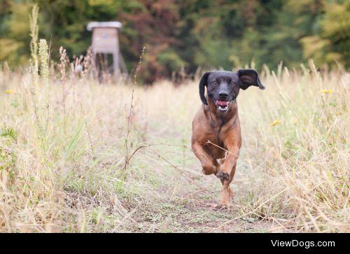 Run baby run    Zuzana Hudak