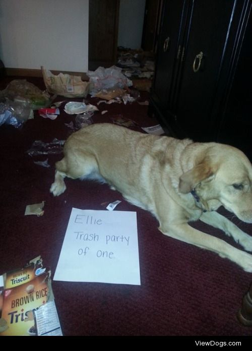 Trash Party  Ellie: Trash Party of One Once the family leaves, I…
