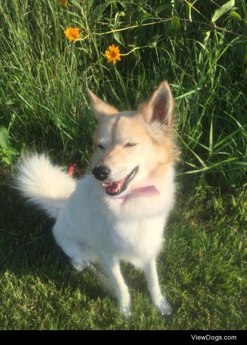 pixpup:  handsomedogs pixel loves sunbathing for sunkissed…