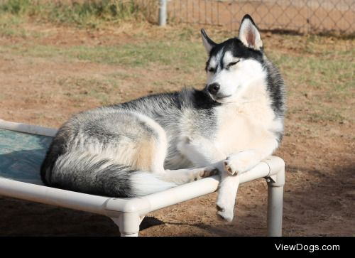 6woofs:  Sunkist SundayContrary to popular belief, huskies love…