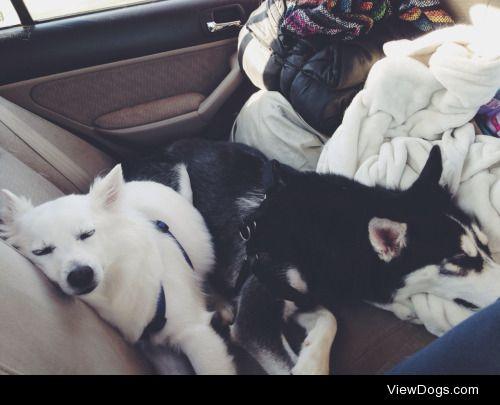 Yeti Monster & Icee Peyote • road trip to Colorado
