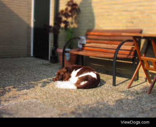 redsirion:  Ahh… those lovely naps in the sun…