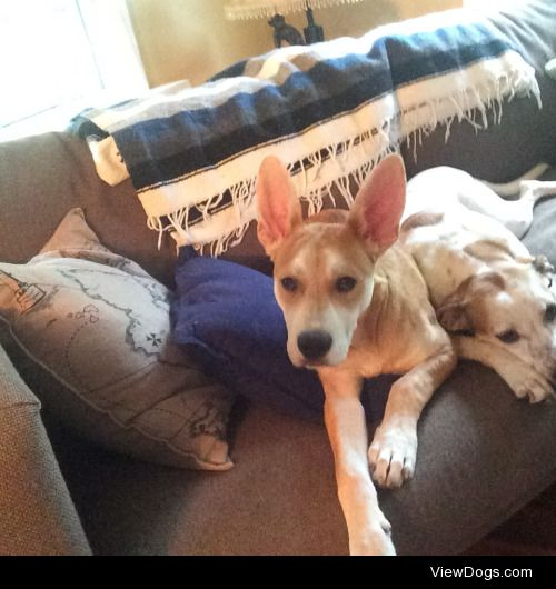 4 month old Anchor with the big ears and 3 yr old Bella next to…