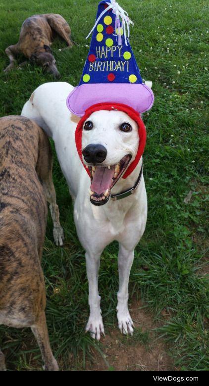 oliveramy:  greyhound-murphy:  greyt-hounds:  Happy 5th Birthday…