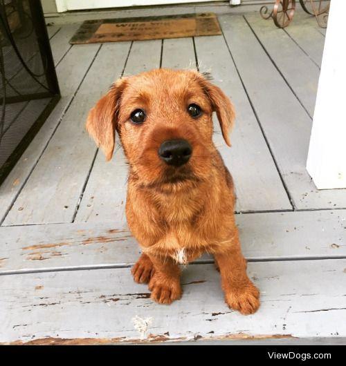 Nigel, my Irish Terrier<3http://iamkaitlynrose.tumblr.com/