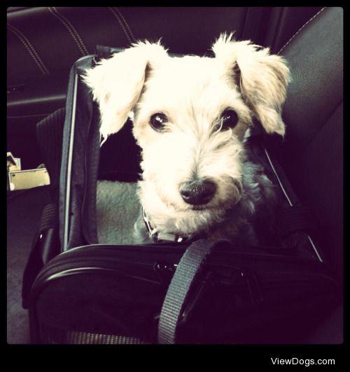 Benji, my Silky Terrierhttp://iamkaitlynrose.tumblr.com/