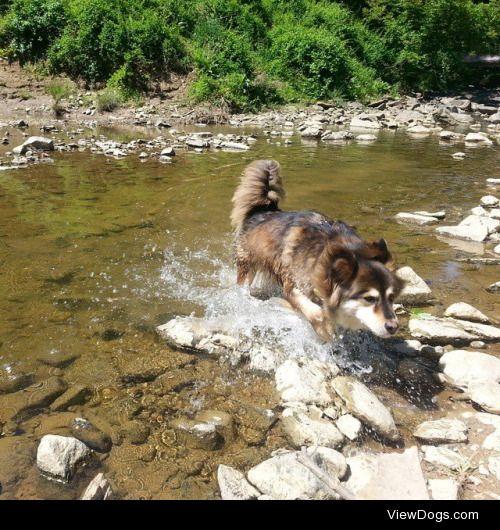 Ellie splashing around near the river