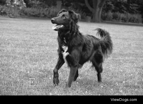 This is Hexe, a 2 year old collie rescue! She adores children…