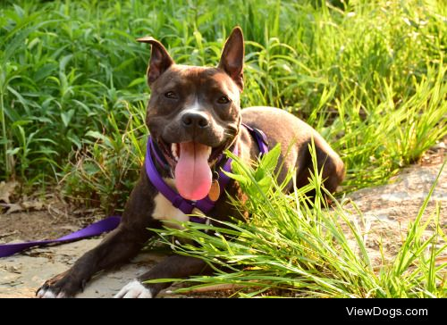 achoirofcritters:  Evie enjoying some sunshine for handsomedogs'…