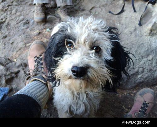 Pup named Tormenta in Cajon del Maipo, Chile