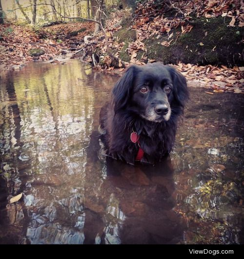 Gracie's favorite hiking and swimming spot! My little…