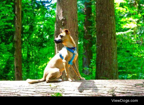 feistyfinley:  For handsomedogs Sunkist Sunday!