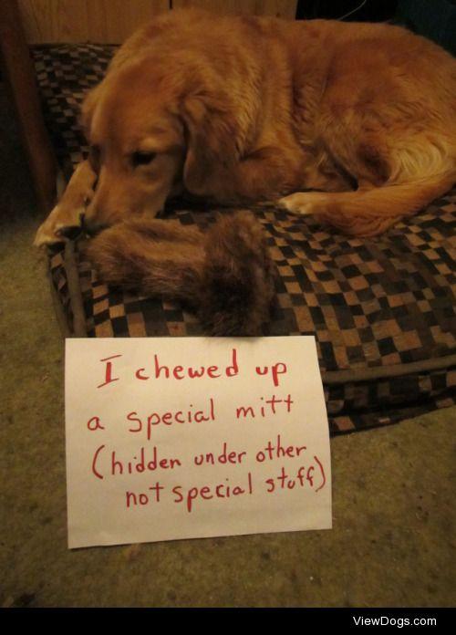Secret agent for PETA  Our 8 month old recent rescue dog dug…