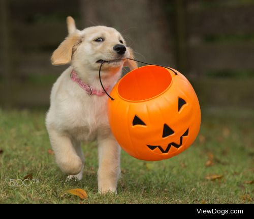 Lori Weber|Pup & Pumpkin