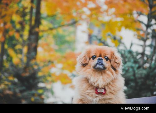 Alissiya Lis|Autumn dog