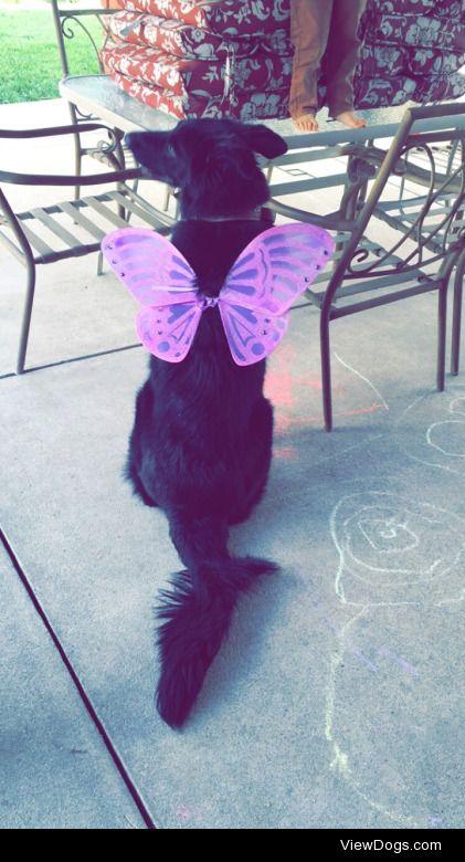 Wednesday in her Halloween costume :)