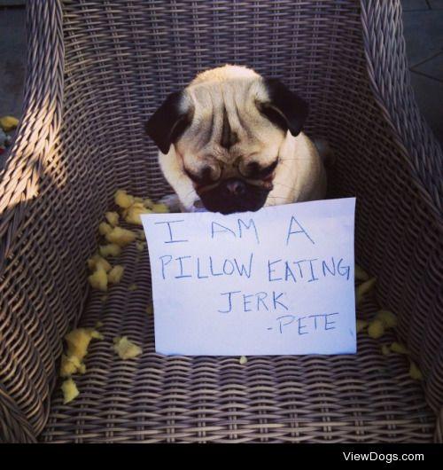 Outdoor Seating Arrangements Unacceptable  Pete the pug spent…