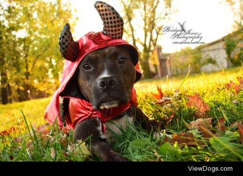 achoirofcritters:  HAPPY HALLOWEEN! Have a safe, fun, and wicked…