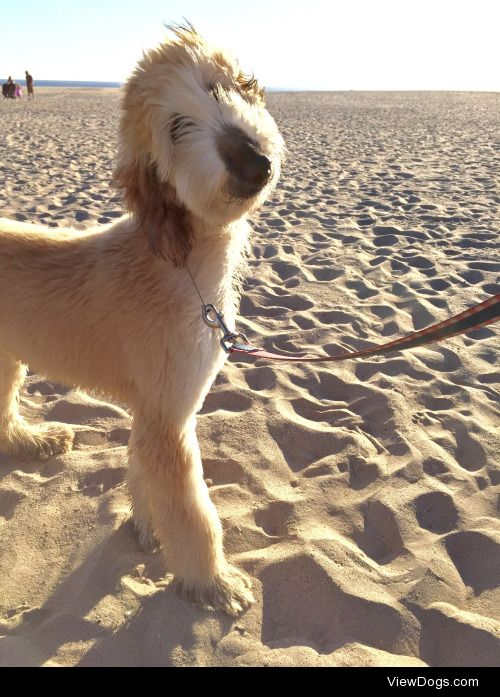 fawningoverfawn:  Fawn went to the beach for the first time…