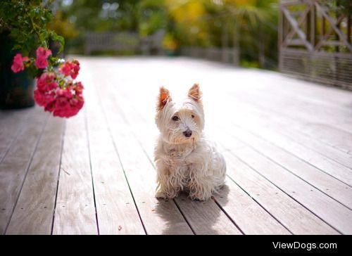 Emmanuel Cabau|Dog on the terrace
