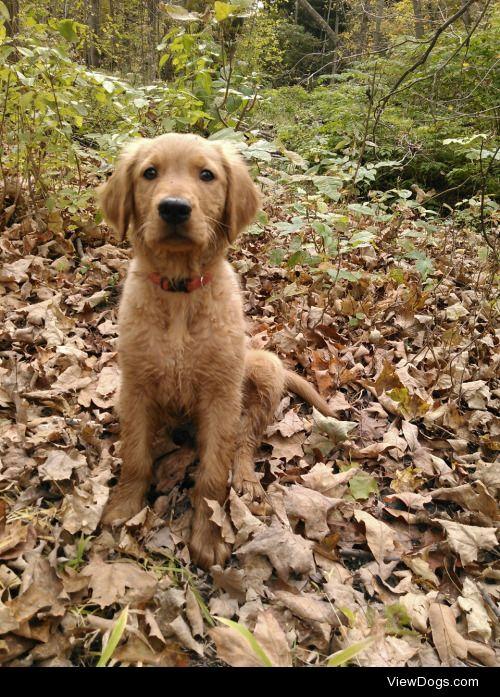 My golden, cooper!