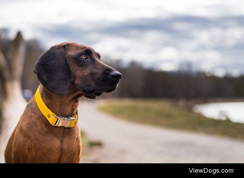 Bogdan H|Dog at the river