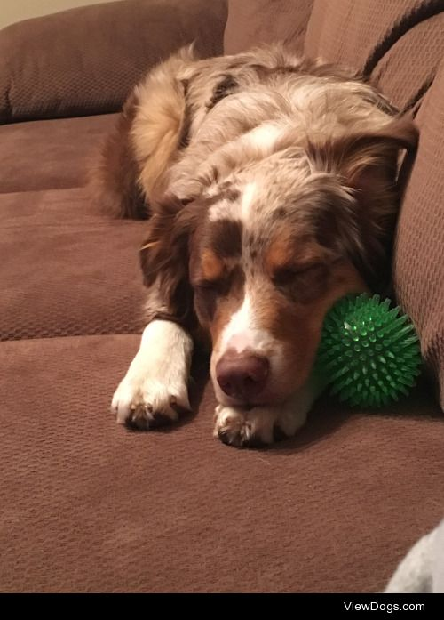 Perfect sleeping Finndog after a great day of hiking and…