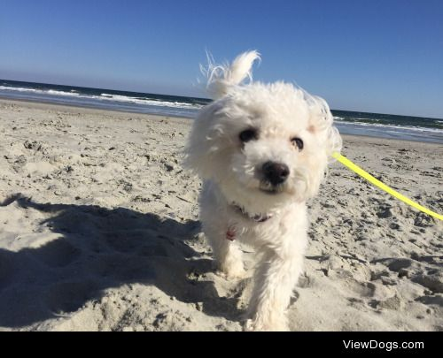 At 6 months old, Lily enjoyed her first ever beach trip by…