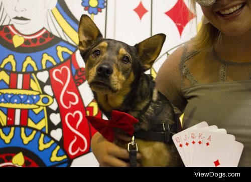 JASE looking suave at our annual casino night fundraiser! He is…