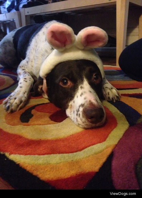 Coco dressed up as the Easter bunny