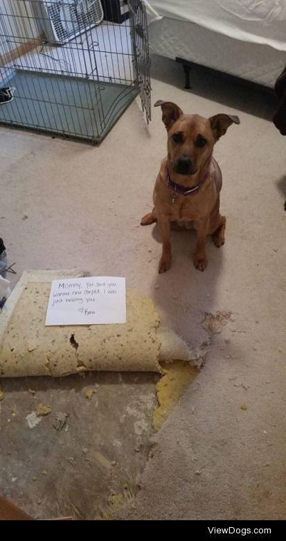 """Overzealous Contractor  The sign says, """"Mommy, you said…"""