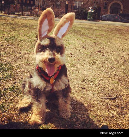 Shredder on a warm Easter Day in Brooklyn. Follow him on his…