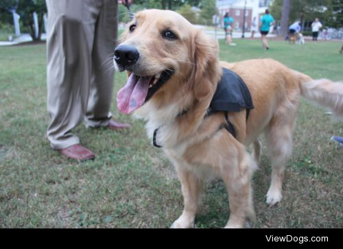 SILER is an Assistance Dog for a Marine with PTS. He was the…