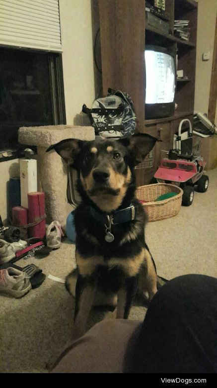 Stryker (aka The Monster). I adopted him from the pound when he…