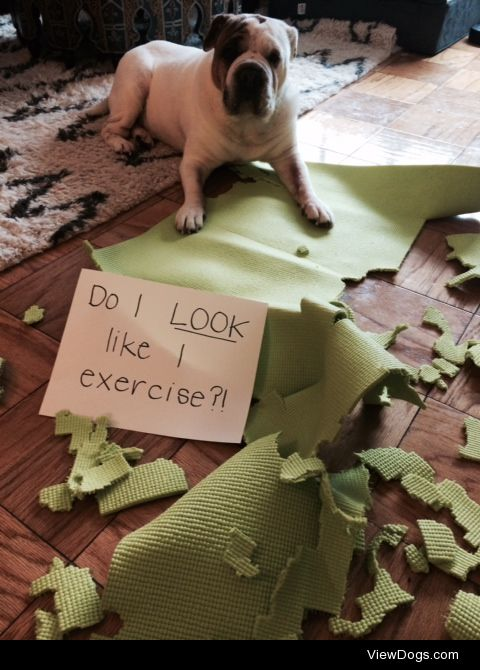 Don't ask me to Downward Dog  Meatball has read all the…