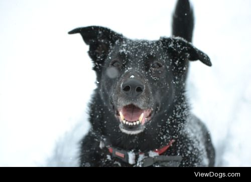 This is Daisy, a rising 6 border collie/lab! -@hotshotgaypilot