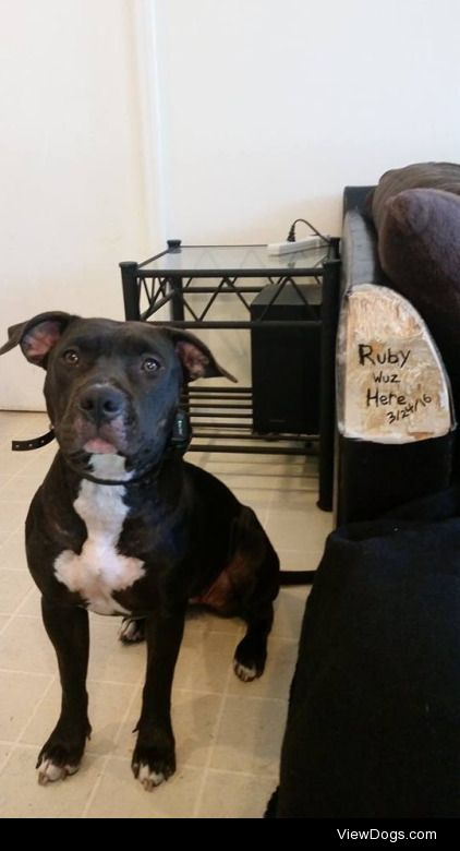 Ruby Was Here  We came home from a 2 day camping trip and…