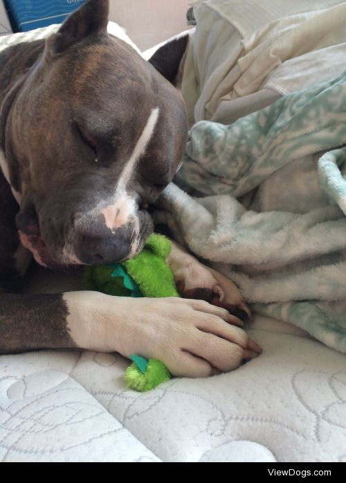 Stax insists on removing the squeak from all his toys, we all…