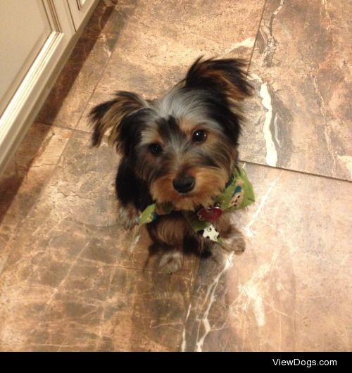 Deano, looking so dapper after his first haircut! He's a five…