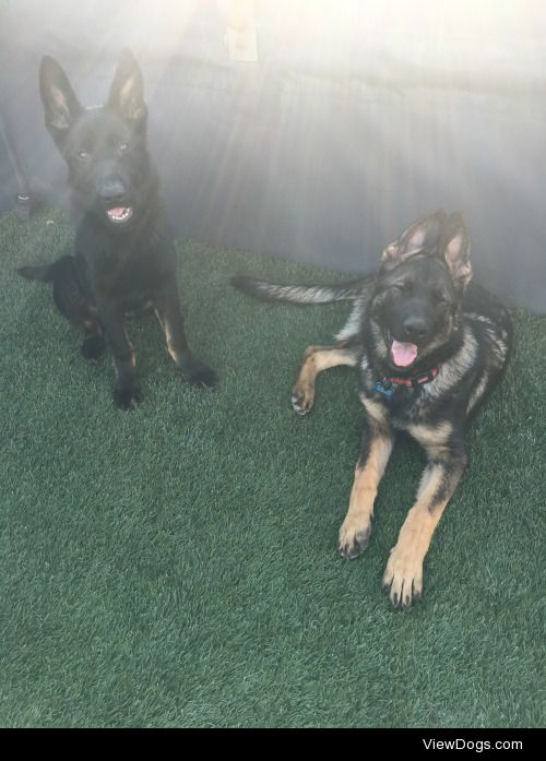 My little babies enjoying the sun! Skye (left) and Venus (right)