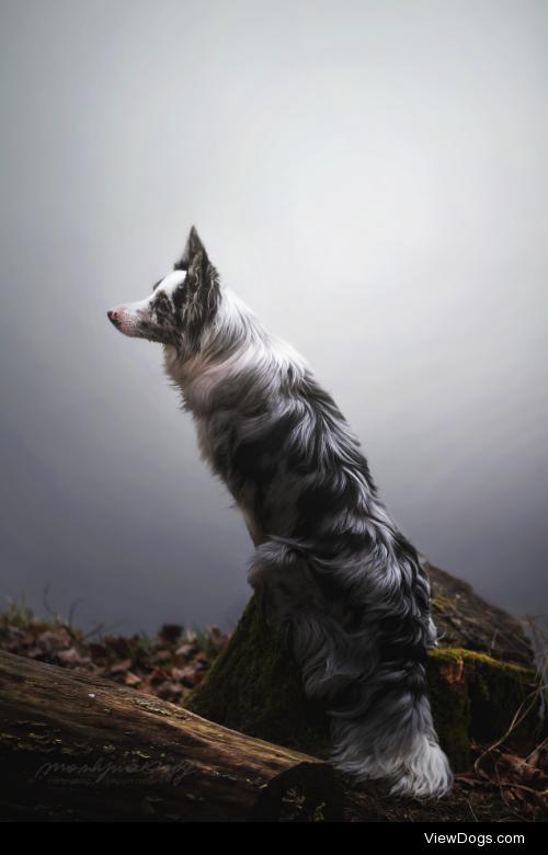 Fox in the fog :by Martyna Ożóg