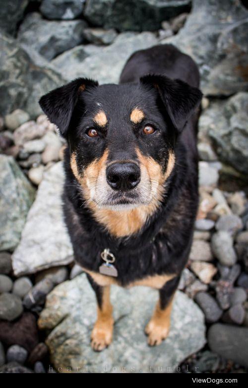 heart-dogs:  MadsApril'16