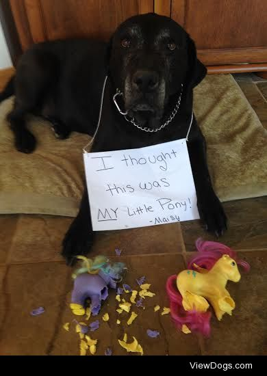 Whose Little Ponies?!  Our Mastiff-Lab mix, Maisy, kept sneaking…