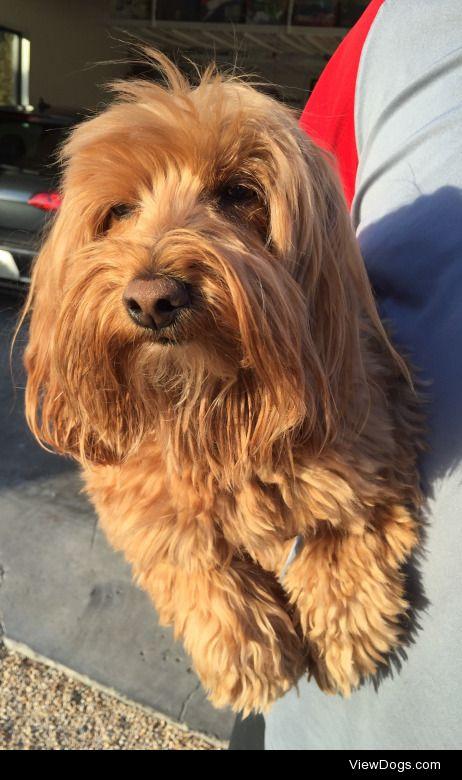 This is my beautiful pup Muffin!  She's around 10 years…